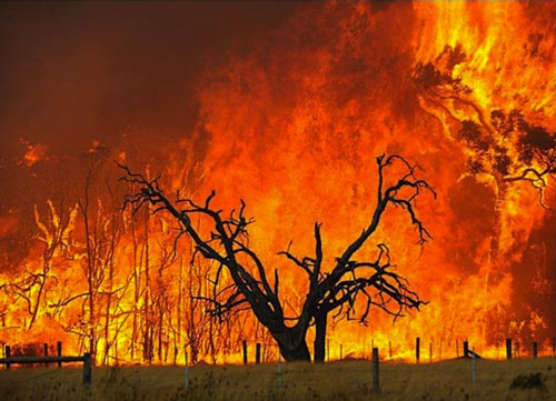 Building in a Bushfire Zone? Here's What You Need to Know